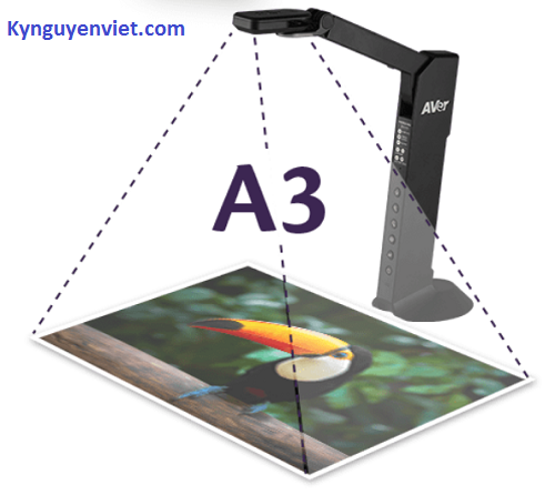 AVerVision M11-8MV
